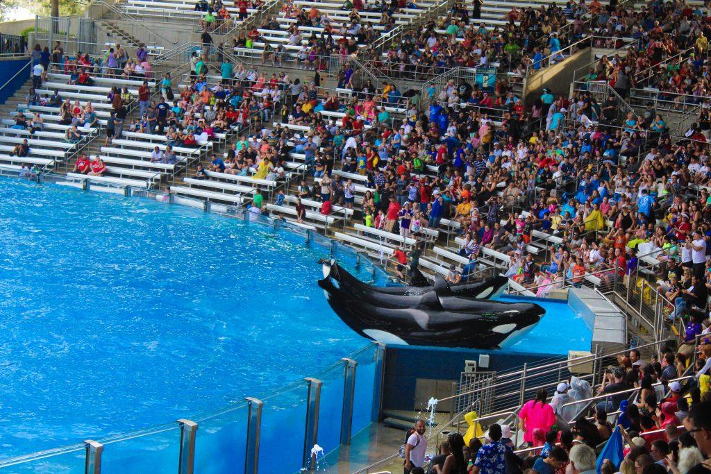 sea world orlando whale family show
