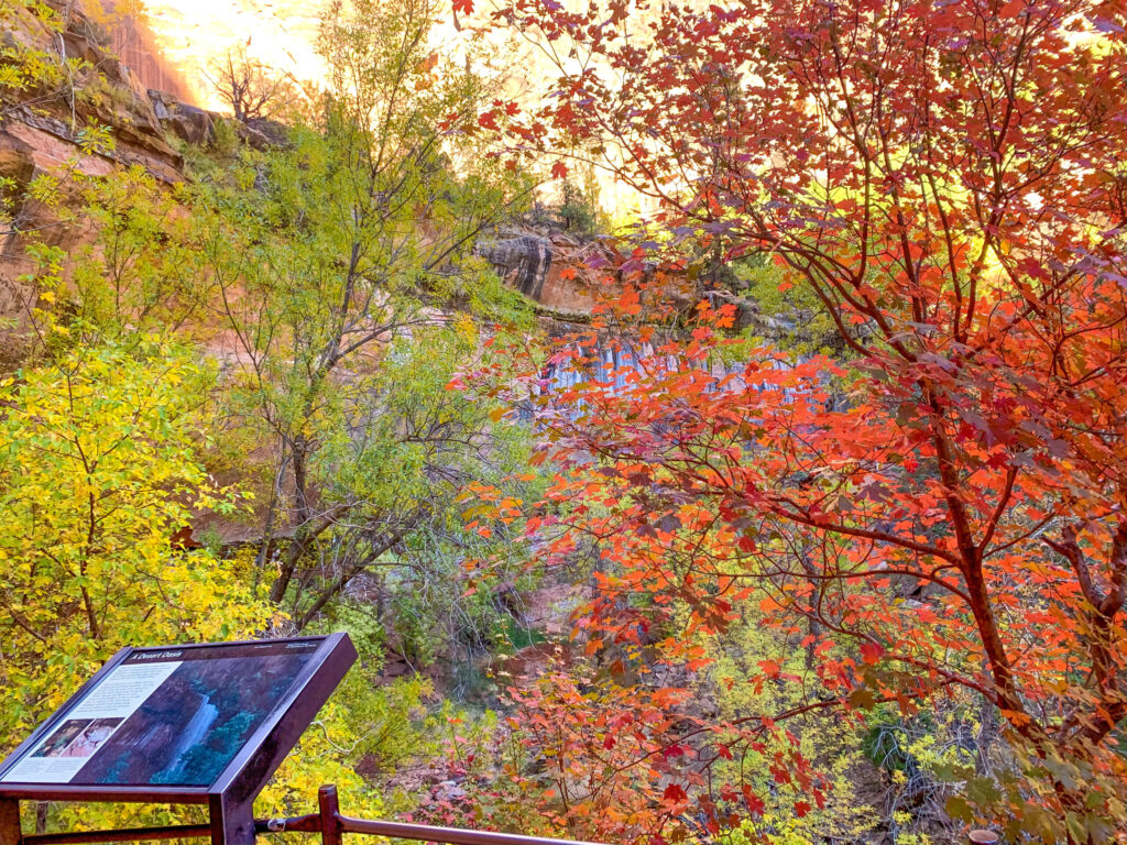 fall colors in Zion national park best season to visit